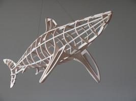 Shark, frame